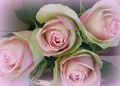 Rose positive attitude