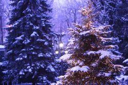 Winter Wonderland-1