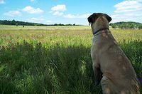 Dog.field