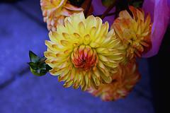 Eckart flower