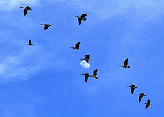 Flying_geese