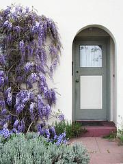 Wisteria_and_door