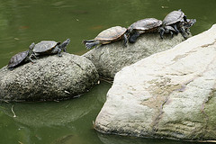 No_limit_turtles