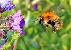 Bee_patient_4