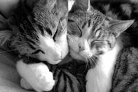 Kute_kittens_2