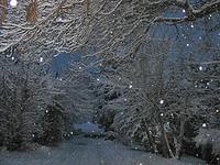 Snowflakesjpeg